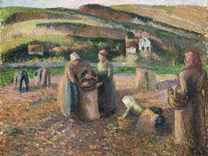 Picking Potatoes, 1893 by Camille Pissarro