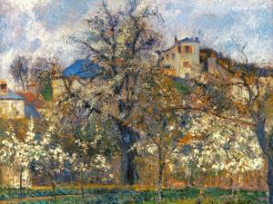Pissarro: Garden, 1877 by Camille Pissarro