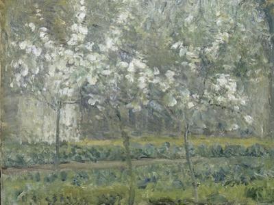 Printemps. Pruniers en fleurs, dit : Potager, arbres en fleurs, printemps, Pontoise