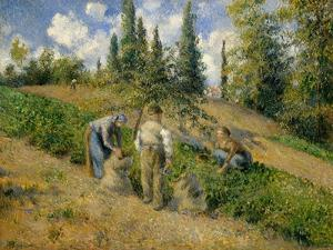 The Harvest, Pontoise, 1881 by Camille Pissarro
