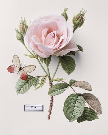 Floral Decoupage II