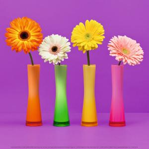 Four Flowers and Pink Background by Camille Soulayrol