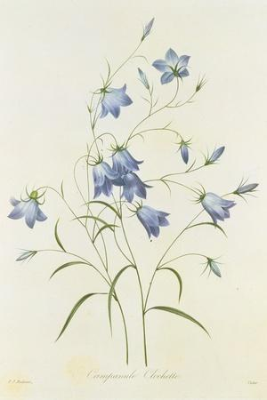 https://imgc.artprintimages.com/img/print/campanula-from-choix-des-plus-belles-fleurs-1827-33_u-l-pq0gvu0.jpg?p=0