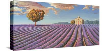Campi di lavanda-Adriano Galasso-Stretched Canvas Print
