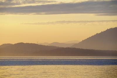Canada, B.C, Sidney Island. Layered Yellow Islands with Bird Flying-Kevin Oke-Photographic Print