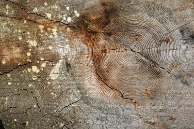 Canada, British Columbia, Cabbage Island. Cut Cedar Log Showing Age Rings-Kevin Oke-Photographic Print