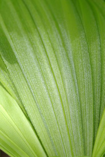 Canada, British Columbia, Cowichan Valley. Honeymoon Bay Wildflower Reserve. Close-Up of Green Leaf-Kevin Oke-Photographic Print