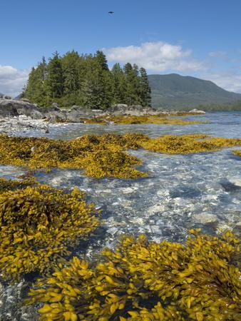 https://imgc.artprintimages.com/img/print/canada-british-columbia-pacific-rim-national-park-broken-islands-marine-park-kelp_u-l-q1gxkqv0.jpg?p=0