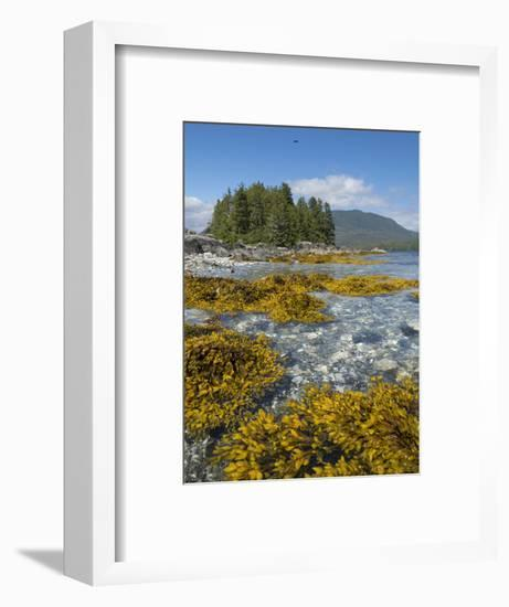 Canada, British Columbia, Pacific Rim National Park. Broken Islands Marine Park, kelp-Merrill Images-Framed Photographic Print