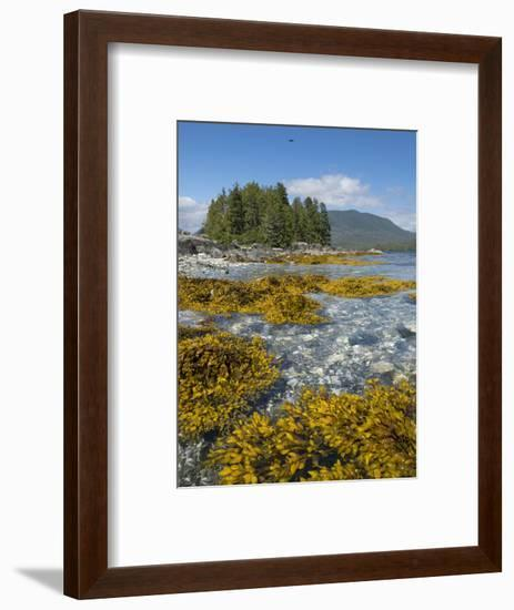 Canada, British Columbia, Pacific Rim National Park. Broken Islands Marine Park, kelp-Merrill Images-Framed Photographic Print