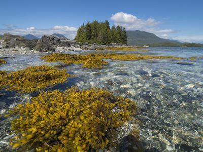 https://imgc.artprintimages.com/img/print/canada-british-columbia-pacific-rim-national-park-broken-islands-marine-park_u-l-q1gxksf0.jpg?p=0