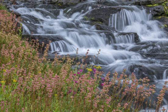 Canada, British Columbia, Selkirk Mountains. Leatherleaf saxifrage flowers and cascading stream.-Jaynes Gallery-Photographic Print