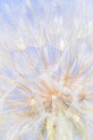 https://imgc.artprintimages.com/img/print/canada-british-columbia-yellow-salsify-flower-seeds-close-up_u-l-q1dfd5f0.jpg?p=0