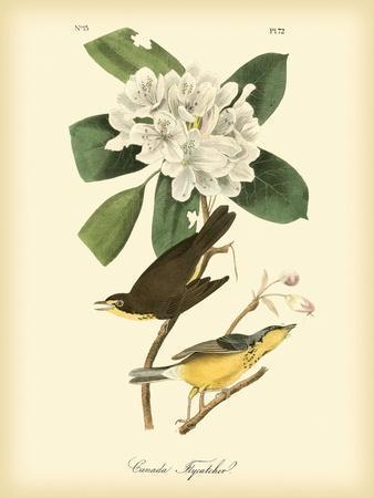 https://imgc.artprintimages.com/img/print/canada-flycatcher_u-l-pfr47d0.jpg?artPerspective=n