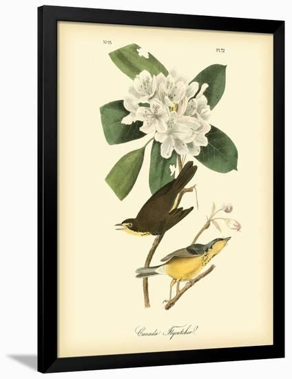 Canada Flycatcher-John James Audubon-Framed Premium Giclee Print
