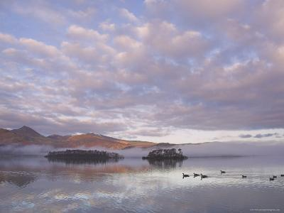 Canada Geese, Derwent Water, Lake District National Park, Cumbria, England, United Kingdom-Neale Clarke-Photographic Print