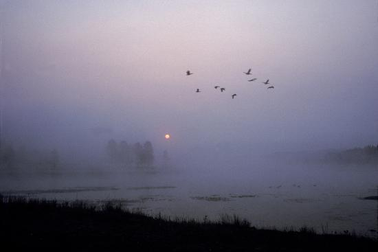 Canada Geese Fly over Alum Creek at Dawn-Tom Murphy-Photographic Print