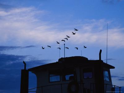 Canada Geese Flying High over a Boat at Twilight-Raymond Gehman-Photographic Print