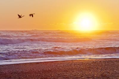 Canada Geese over Rialto Beach at Sunset, Olympic NP, Washington, USA-Jaynes Gallery-Photographic Print