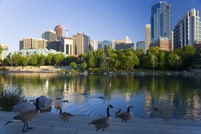 Canada Geese Resting at a Lake with Skyline, Calgary, Alberta, Canada-Peter Adams-Photographic Print