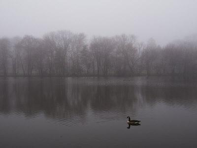 Canada Goose on a Lake in the Fog-Todd Gipstein-Photographic Print