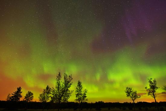 Canada, Manitoba, Birds Hill Provincial Park. Northern lights and tree silhouettes.-Jaynes Gallery-Photographic Print