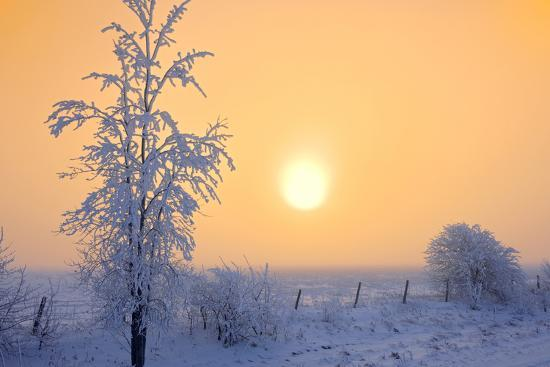 Canada, Manitoba, Dugald. Hoarfrost-covered trees in fog.-Jaynes Gallery-Photographic Print