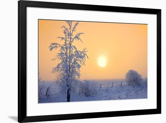 Canada, Manitoba, Dugald. Hoarfrost-covered trees in fog.-Jaynes Gallery-Framed Photographic Print