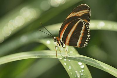 https://imgc.artprintimages.com/img/print/canada-manitoba-winnipeg-assiniboine-park-butterfly-close-up-in-garden_u-l-q1gam7s0.jpg?p=0