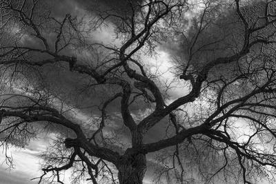 https://imgc.artprintimages.com/img/print/canada-manitoba-winnipeg-black-and-white-of-tree-and-clouds_u-l-q1gafoa0.jpg?p=0