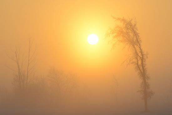 Canada, Manitoba, Winnipeg. Trees in fog at sunrise.-Jaynes Gallery-Photographic Print