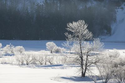 Canada, Nova Scotia, Cape Breton, Cabot Trail, Frosted Trees in Margaree-Patrick J^ Wall-Photographic Print