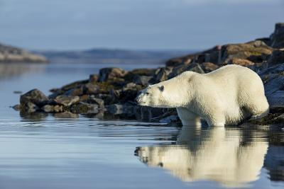 Canada, Nunavut, Repulse Bay, Polar Bears in Shallows of Hudson Bay-Paul Souders-Photographic Print