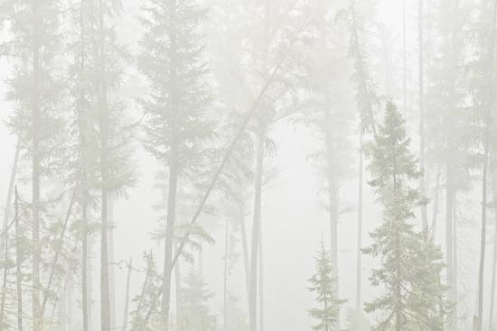 Canada, Ontario, Ear Falls. Forest in fog.-Jaynes Gallery-Photographic Print