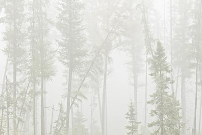 https://imgc.artprintimages.com/img/print/canada-ontario-ear-falls-forest-in-fog_u-l-q1gav280.jpg?p=0