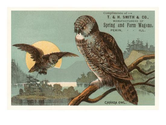 Canada Owls--Art Print