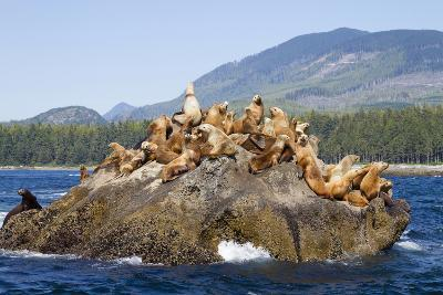 Canada, Pacific Rim National Park Reserve, West Coast Trail, Steller Sea Lions-Jamie And Judy Wild-Photographic Print