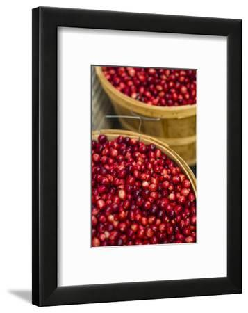 Canada, Quebec, Montreal. Little Italy, Marche Jean Talon Market, cranberries-Walter Bibikow-Framed Photographic Print