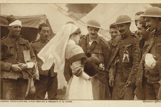 Canadian Troops Presenting a Nurse with a Dog They Found in a German Trench, World War I--Photographic Print