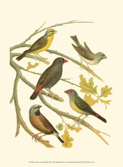 Canaries and Cage Birds III-Cassel-Art Print