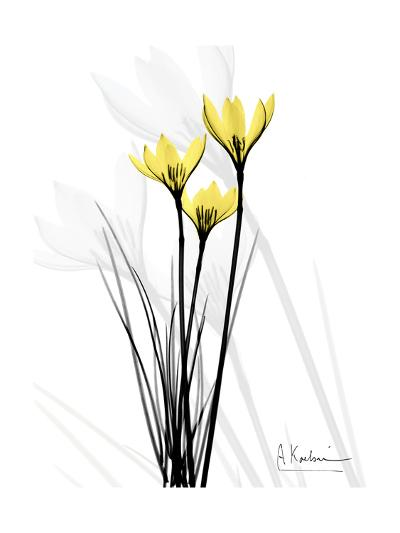 Canary Lily Portrait-Albert Koetsier-Art Print