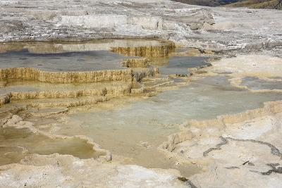 Canary Spring, Travertine Terraces, Mammoth Hot Springs, Yellowstone National Park, Wyoming, U.S.A.-Gary Cook-Photographic Print