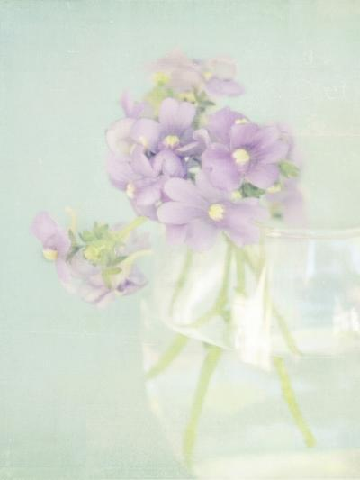 Candy Flowers V-Shana Rae-Giclee Print