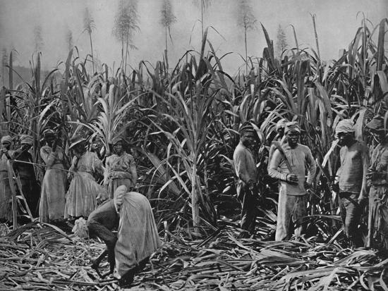 'Cane-Cutters in Jamaica', 1891-Unknown-Photographic Print