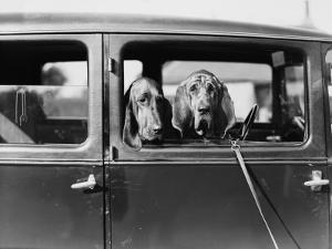 Canine Critics
