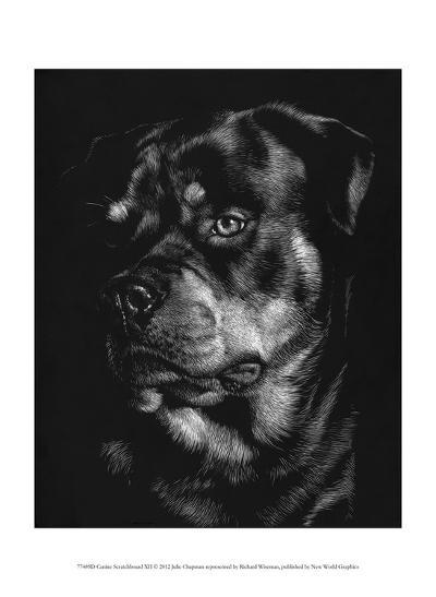 Canine Scratchboard XII-Julie Chapman-Art Print
