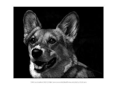 Canine Scratchboard XXIX-Julie Chapman-Art Print