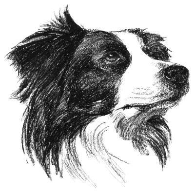 Canine Study I-Ethan Harper-Art Print