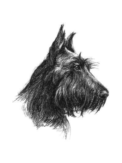 Canine Study II-Ethan Harper-Art Print