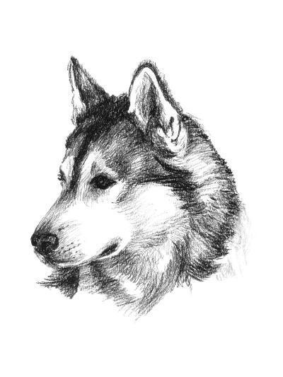 Canine Study III-Ethan Harper-Art Print